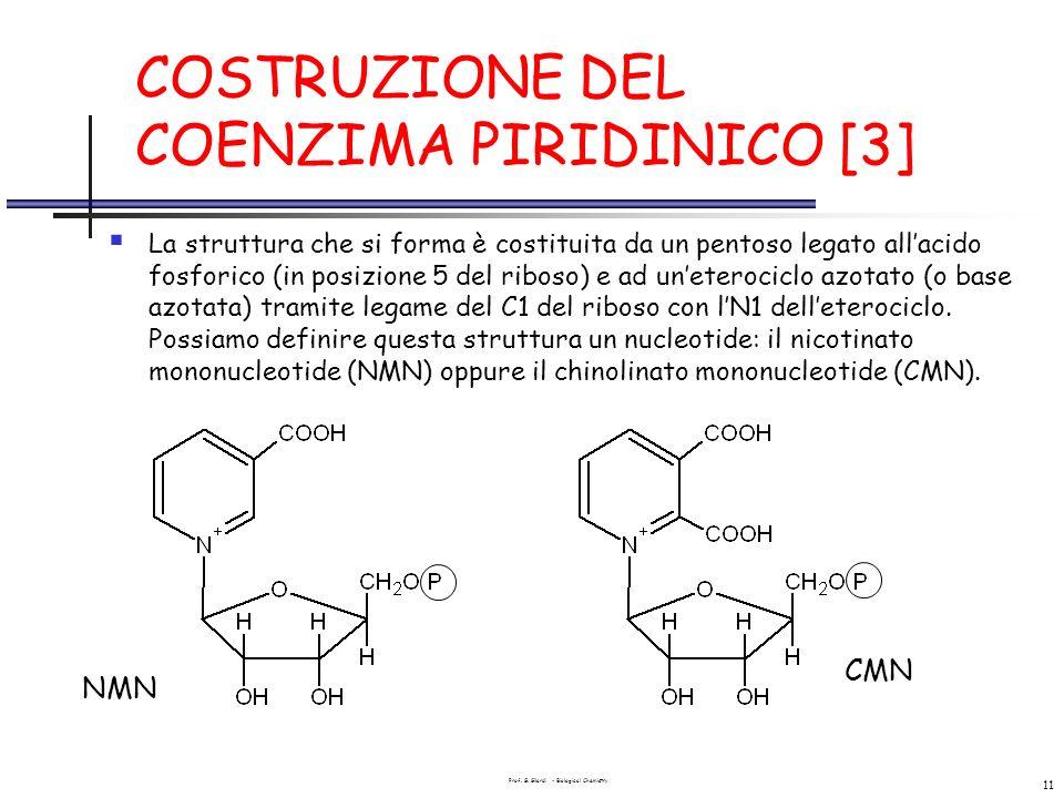 COSTRUZIONE DEL COENZIMA PIRIDINICO [3]